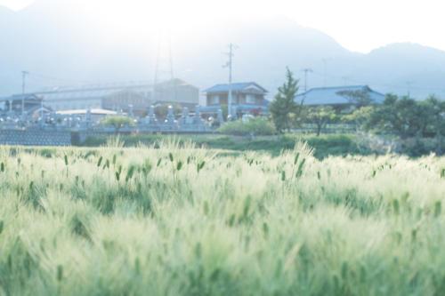 haru-0013